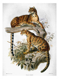 Clouded Leopard, 1883 Posters