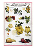 New Fruits, C1950S Giclee Print