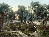 Garden Of Gethsemane Photographic Print
