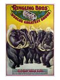 Circus Poster, C1899 Poster