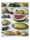 Bustos: Still Life, 1874 Giclee Print by Hermenegildo Bustos