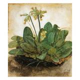 DRer: Tuft Of Cowslips Giclee Print by Albrecht Dürer