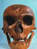 Neanderthal Skull Photographic Print