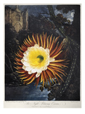 Thornton: Cereus Giclee Print by Robert Dunkarton