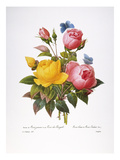 Redoute: Roses, 1833 Giclee Print by Pierre-Joseph Redouté