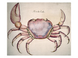 Land Crab Giclee Print by John White