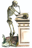 Vesalius: Skeleton, 1543 Print by Andreas Vesalius