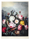 Thornton: Roses Giclee Print by Richard Earlom