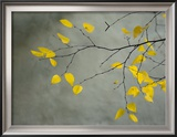 Yellow Autumnal Birch (Betula) Tree Limbs Against Gray Stucco Wall Framed Photographic Print by Images Monsoon