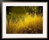 Golden Plants along River with Reflections of Trees Framed Photographic Print by Jan Lakey
