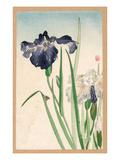 Japanese Irises Giclee Print by  Yamagishi