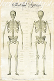 Skeletal-System Poster