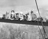 Cats on Girder Posters