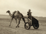 Syria: Camel Race, C1938 Photographic Print by John D. Whiting