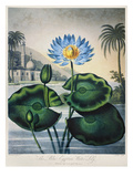 Thornton: Water Lily Prints by Joseph Constantine Stadler