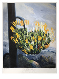 Thornton: Aloe Giclee Print by  Caldwall