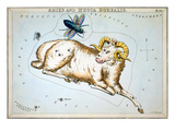 Constellation: Aries Premium Giclee Print by Sidney Hall