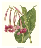 Tropical Indian Reed Giclee Print by Samuel Curtis