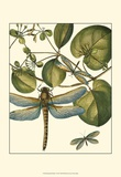 Dragonfly Medley I Poster