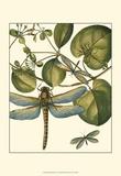 Dragonfly Medley I Poster