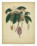 Engelmann Botanical I Posters by  Engelmann