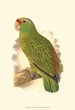 Festive Amazon Parrot Posters