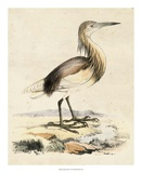 Antique Heron I Giclee Print