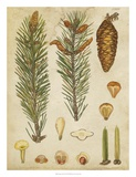 Vintage Conifers IV Giclee Print