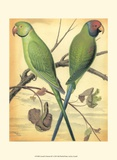 Cassell's Parrots III Posters by  Cassell