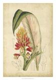 Curtis Tropical Blooms II Giclée-Druck von Samuel Curtis