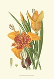 Striking Lilies I Prints by Edward Step