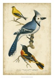 Wilson's Blue Jay Giclee Print by Alexander Wilson