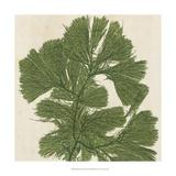 Brilliant Seaweed IV Giclee Print