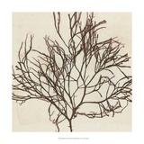 Brilliant Seaweed II Giclee Print by  Vision Studio