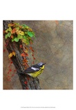 Magnolia Warbler Art by Chris Vest