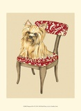 Pampered Pet II Prints by Chariklia Zarris