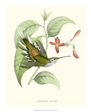 Hummingbird and Bloom III Giclee Print by  Mulsant & Verreaux