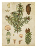 Vintage Conifers III Prints