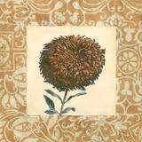 Chrysanthemum Study IV Art by Megan Meagher