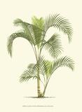 Coastal Palm IV Poster