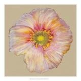 Poppy Blossom I Giclee Print by Alicia Ludwig