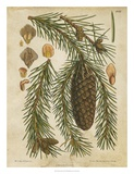 Vintage Conifers I Prints