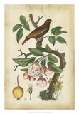 Antique Bird in Nature I Giclee Print