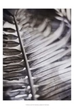 Silvery Frond I Prints by Emily Robinson