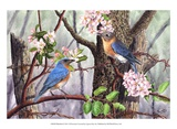Bluebirds Prints by Al Dornish