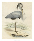 Antique Heron IV Poster