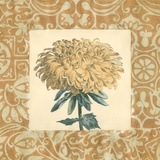 Chrysanthemum Study II Prints by Megan Meagher