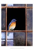 Bluebird Window Kunstdrucke von Chris Vest