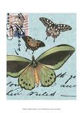 Le Papillon Script VI Posters