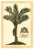 British Colonial Palm IV Plakater